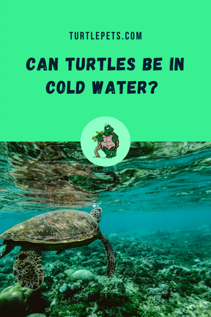 Can Turtles Be In Cold Water pin