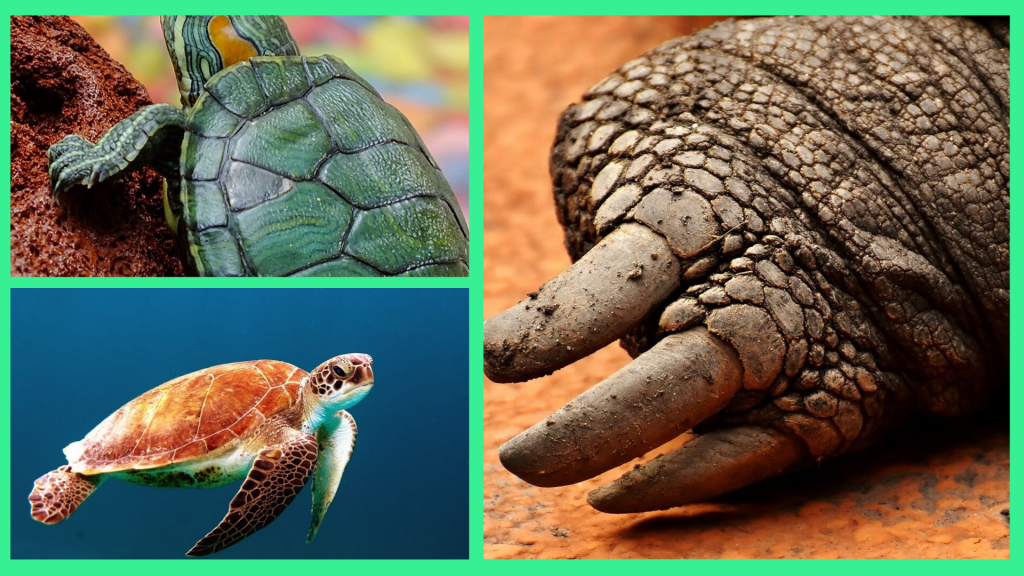 Different Types Of Turtle Feet