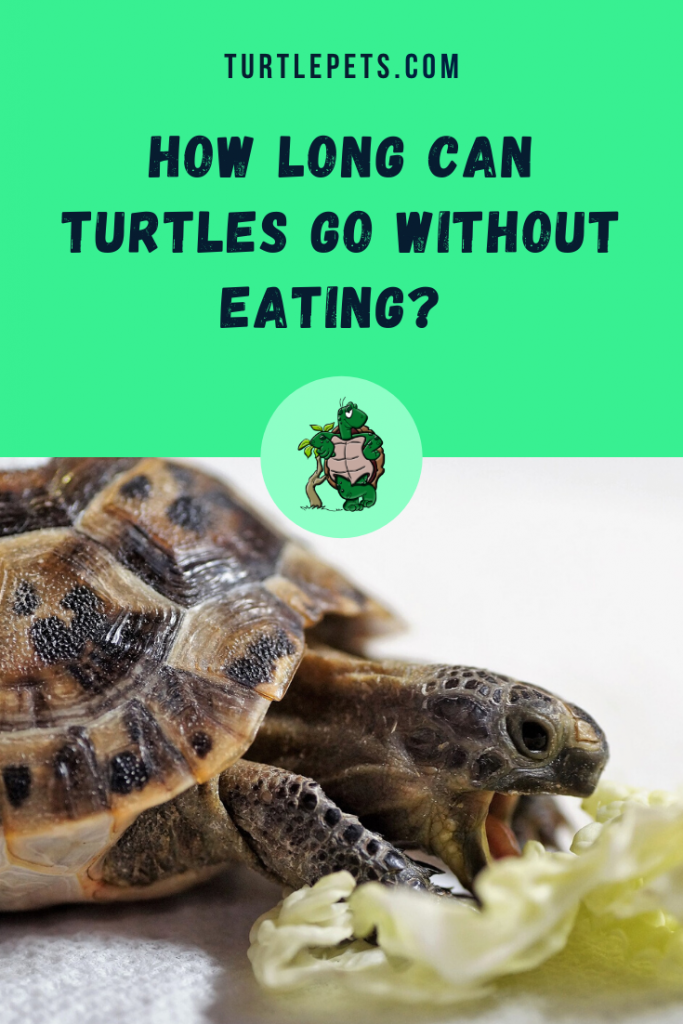 How Long Can Turtles Go Without Eating pin