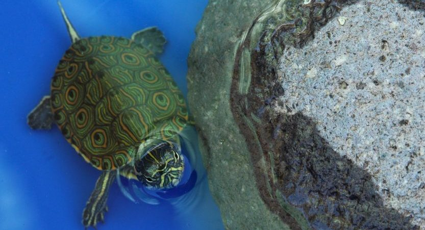 How to Look After a Turtle? [with Pictures]