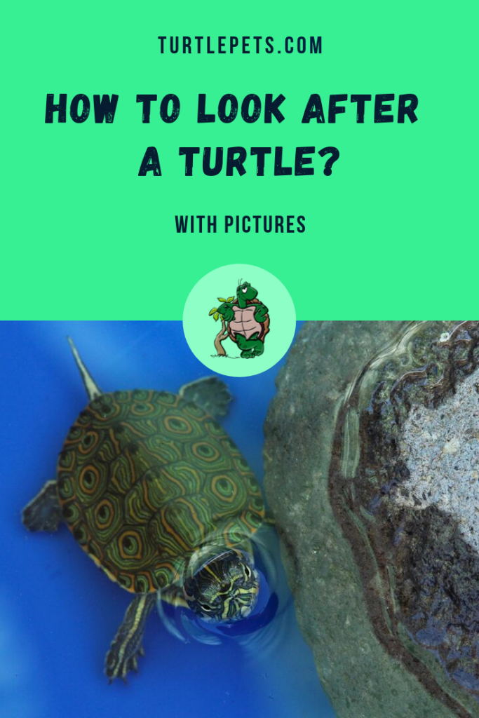 How to Look After a Turtle pin