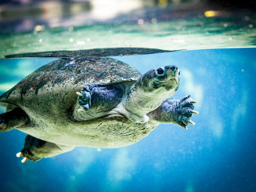 What Happens If A Turtle Is In Cold Water