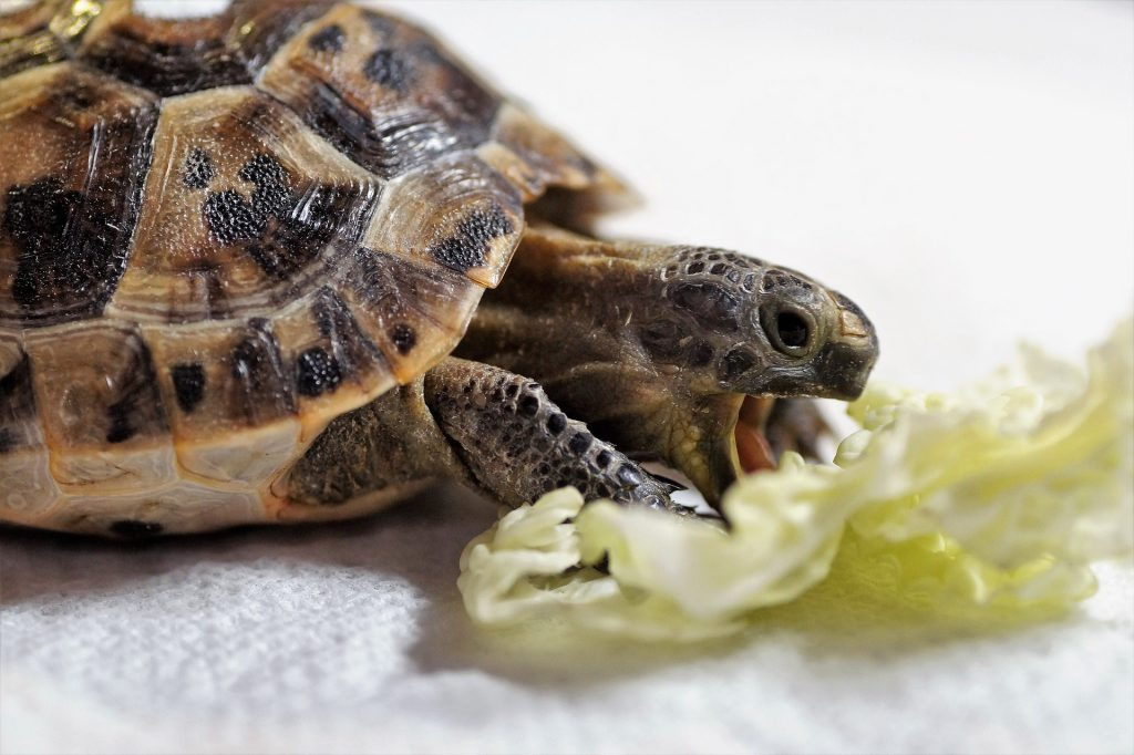 What Vitamins Do Turtles Need