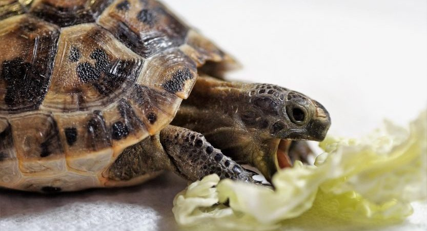 What Vitamins Do Turtles Need? [Best Supplements]