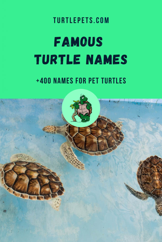 famous turtle names pin