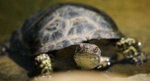 How Smart Are Turtles? Living With An Intelligent Pet Turtle.