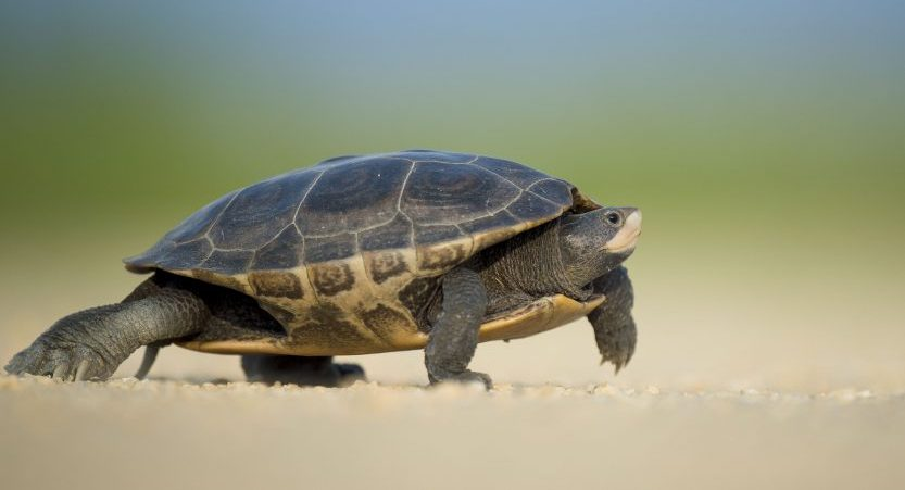 Turtle Names +400 Names for Pet Turtles and Tortoises