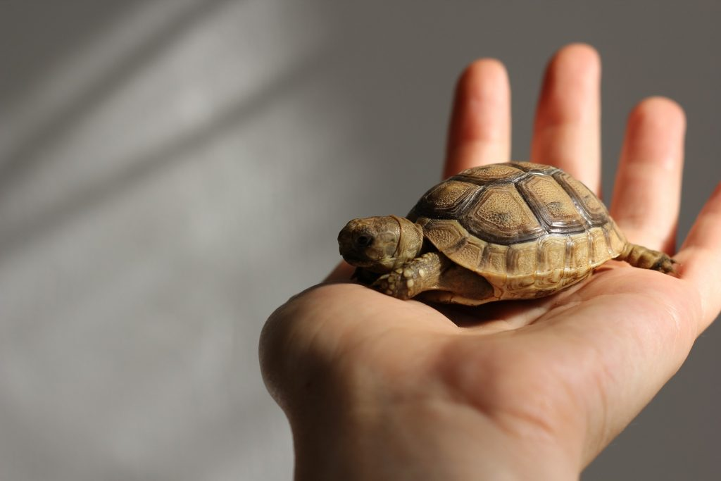 Do Pet Turtles Recognize Their Owners