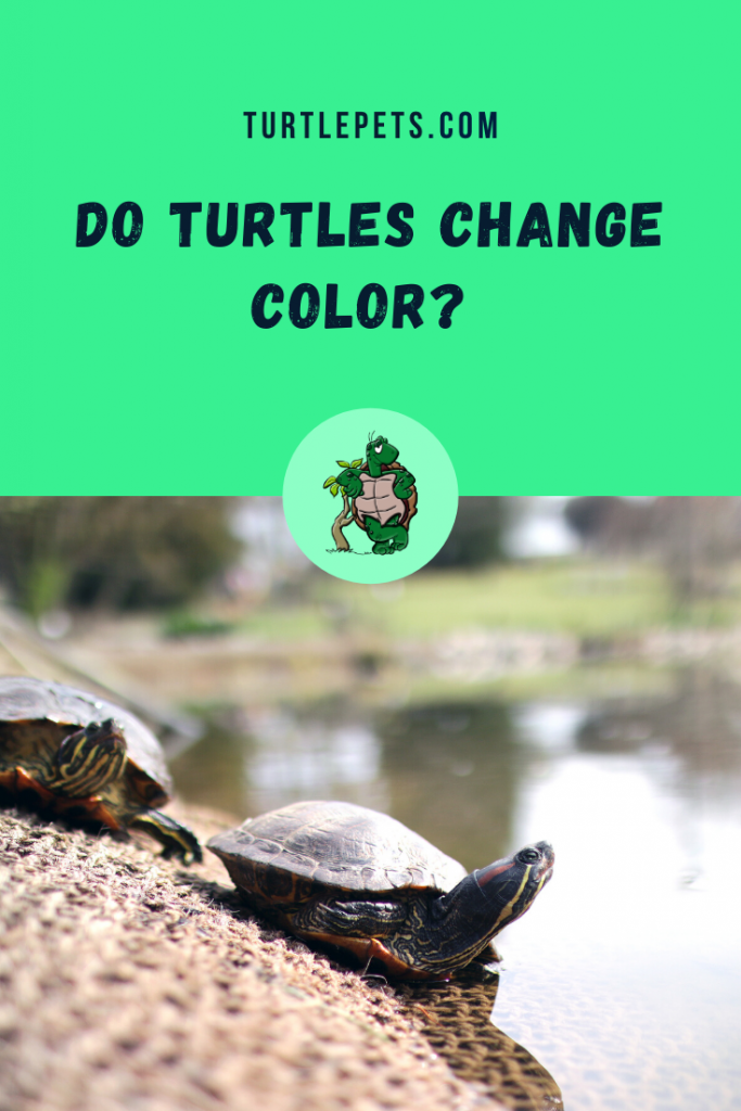 Do Turtles Change Color pin