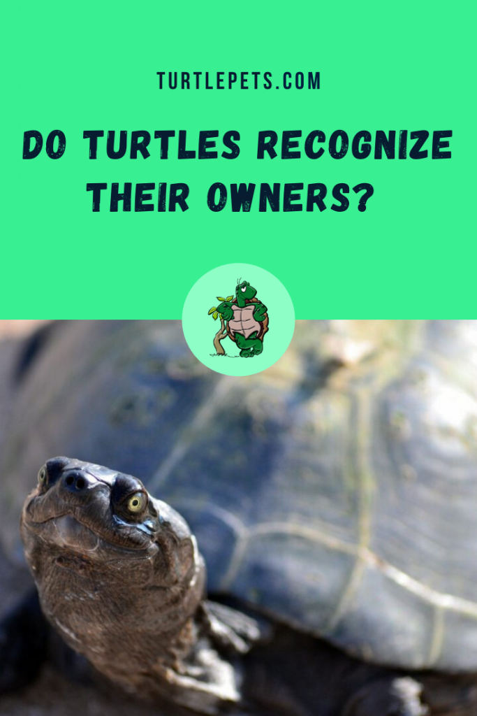 Do Turtles Recognize Their Owners pin