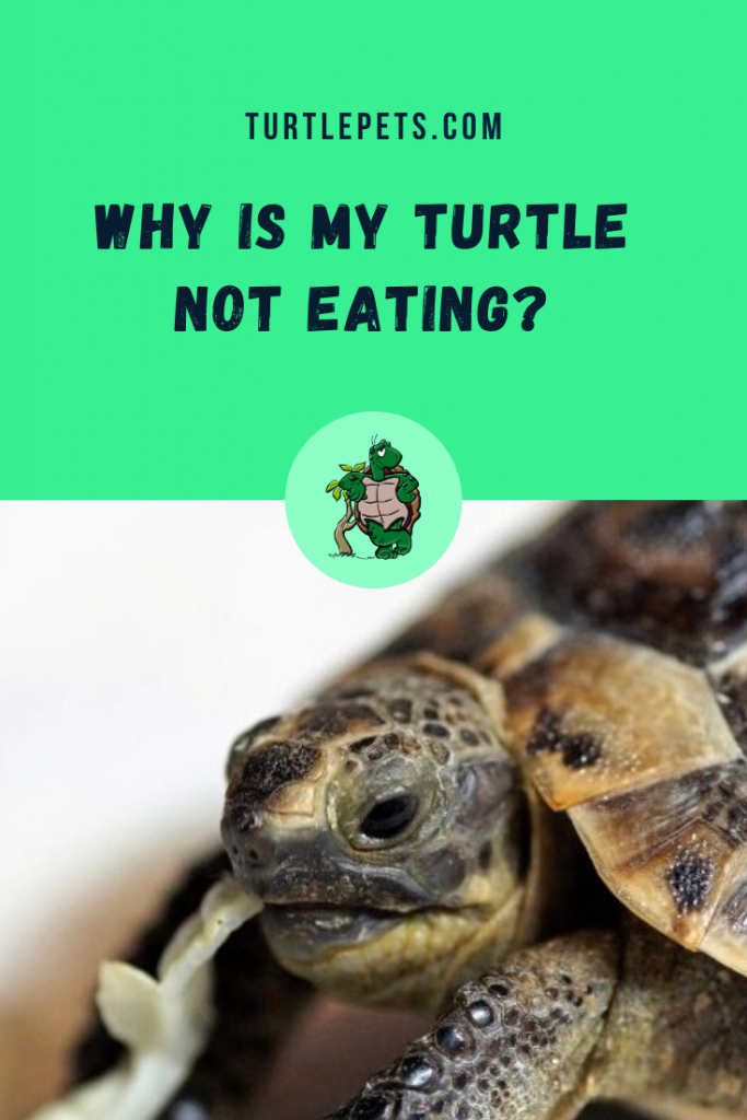 Why Is My Turtle Not Eating pin