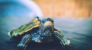 What To Feed a Turtle? 6 Easy Steps [with Pictures]