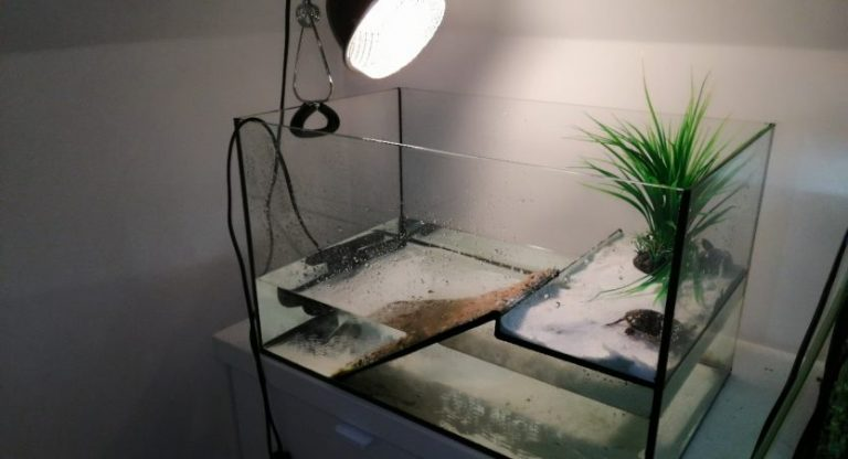 UVB Lights For Turtles