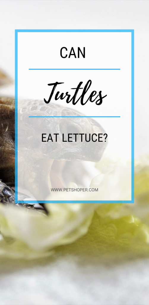 Can Turtles Eat Lettuce pin