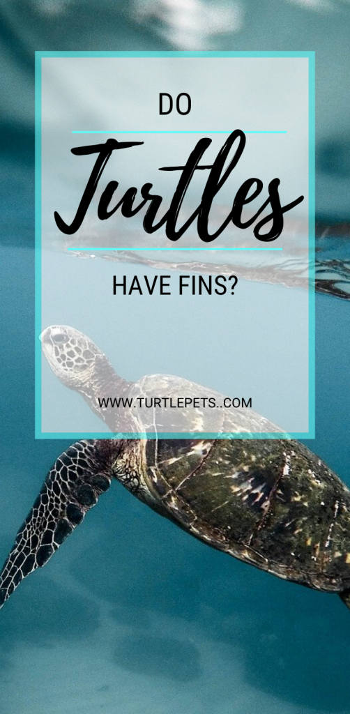 Do Turtles Have Fins pin