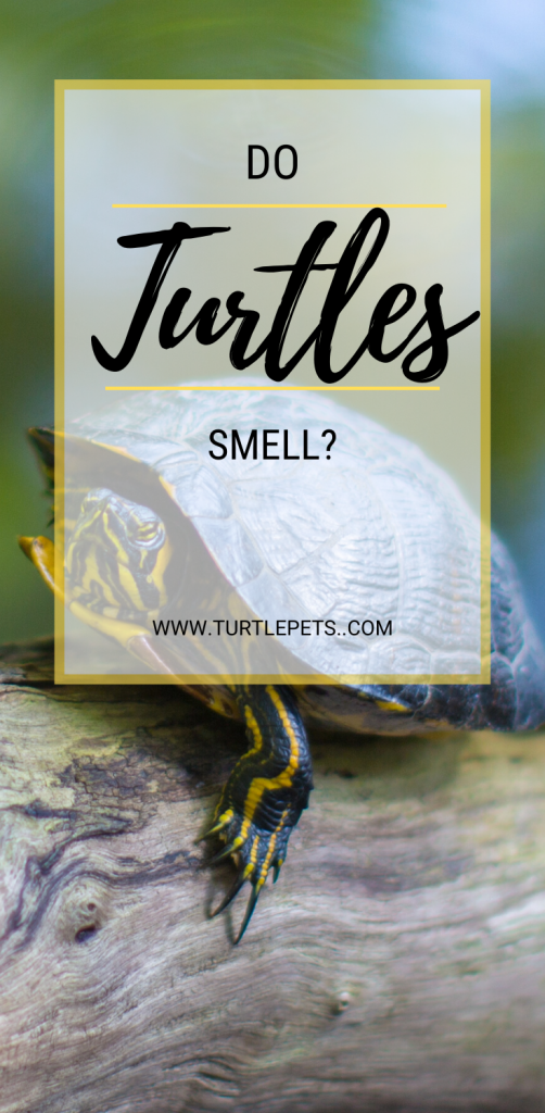 do turtles smell pin