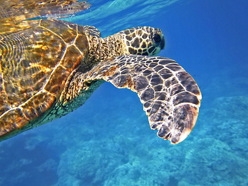 Are Sea Turtles Nocturnal