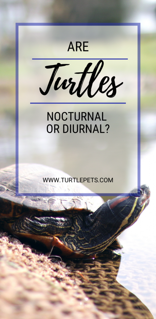 Are Turtles Nocturnal Or Diurnal PIN