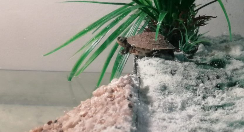 Best Turtle Tank? 10, 20, 40-Gallons [Best Choice's]