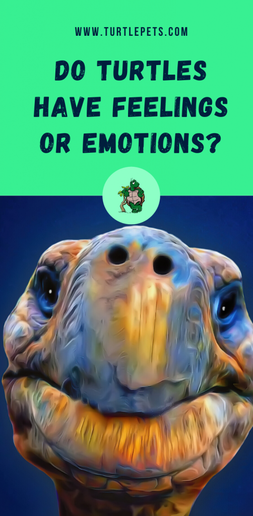Do Turtles Have Feelings or Emotions pin