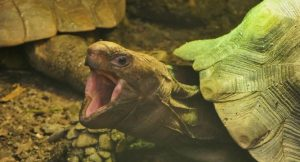 Do Turtles and Tortoises Have Teeth? All You Need To Know!