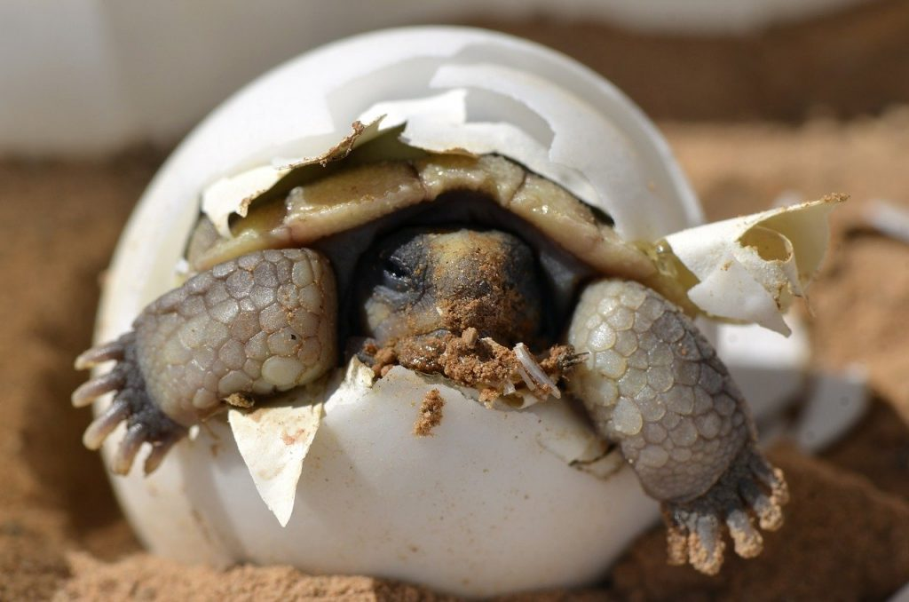 Nesting Turtles May Bury Themselves