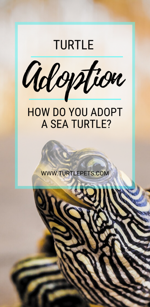 Turtle Adoption pin