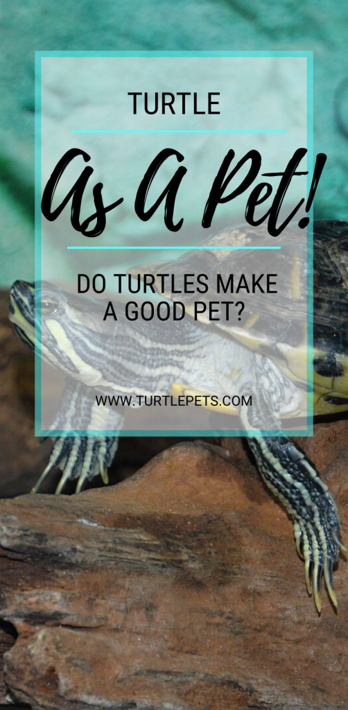 Turtle As A Pet Do Turtles Make A Good Pet pin
