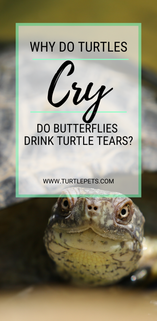 Why Do Turtles Cry pin