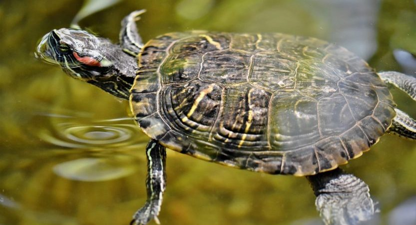 Do Turtles Need Companions? Are Turtles Social?