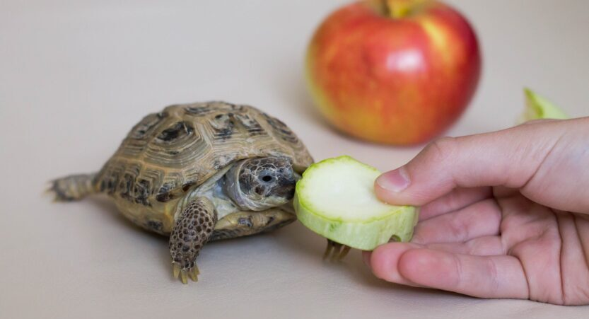 What Can Turtles Eat From Human Food? [11 Delicious Tips]