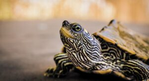 What Do Turtles Symbolize? Discover Turtle Symbolism