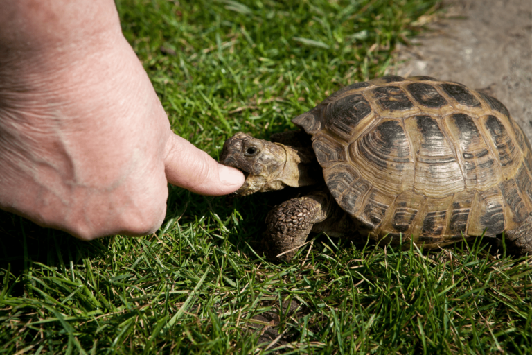 Do turtles bite? How Dangerous Can Turtle Bites Be?