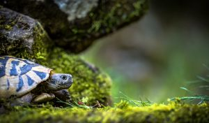How Can You Tell If A Turtle Is Dying?