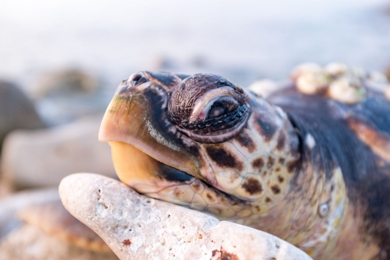 Read more about the article How To Comfort A Dying Turtle? Typical Signs Of A Dying Turtle!